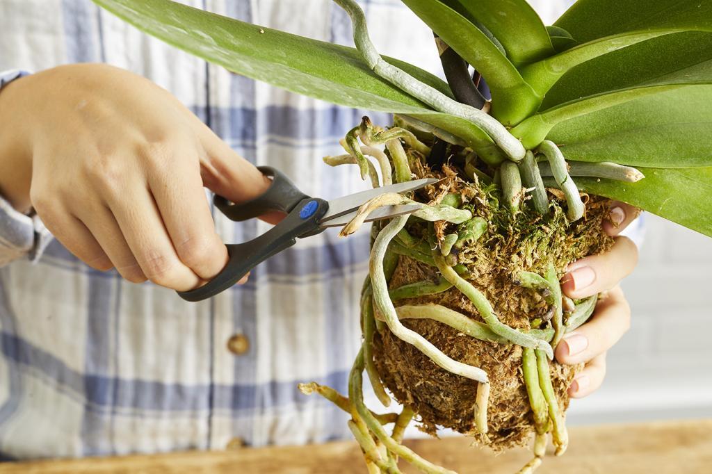 Обрезка плохих корней