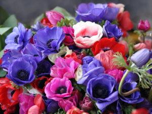 цветы разного цвета
