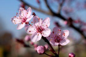 Дерево, цветки, ветки