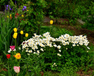 цветы разного цвета, зелень