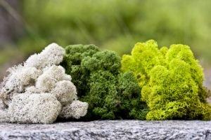 Растения разного цвета