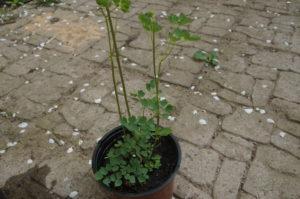 Кашпо, плитка, растение