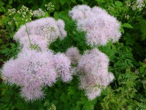 Зеленые листья. бело-розовые цветы