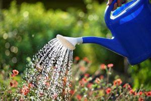 лейка, цветы, вода