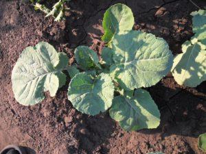 всходы растения, зеленые листья, почва