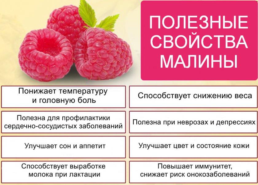 Полезные свойства малины