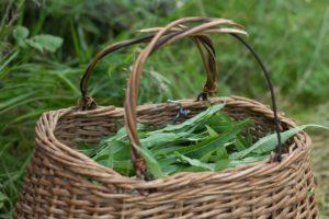 Корзина, листья зеленые