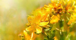 желтые крупные цветы, листья