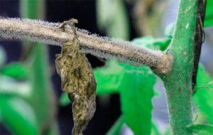 ветка, сухой лист