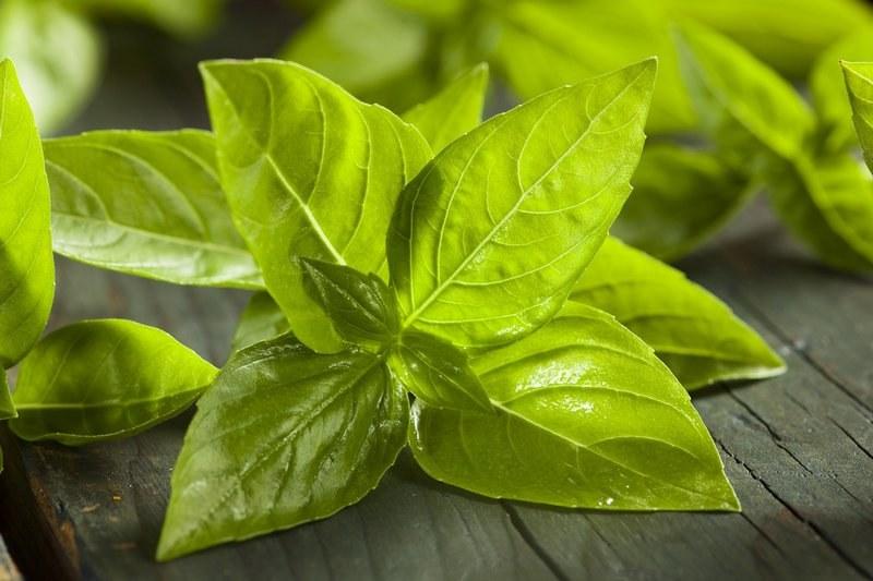 Зелень для мужского здоровья. Базилик лечебные свойства и противопоказания для мужчин