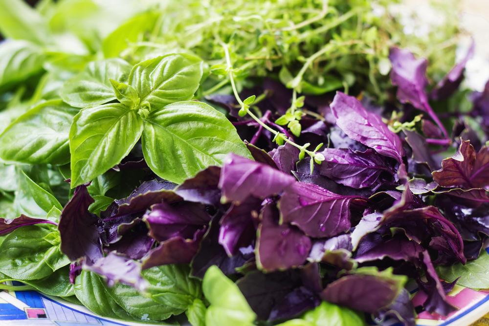 Базилик – польза и вред ароматного растения