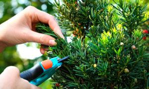 Растение зеленое, ножницы
