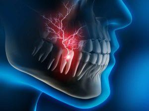 зуб, скелет