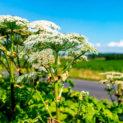 растение с белыми цветками, небо