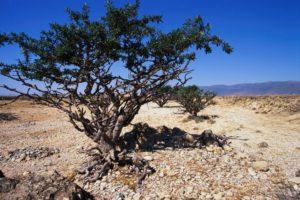 дерево, небо, почва