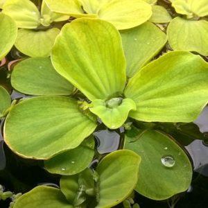 вода, капли, листья растений