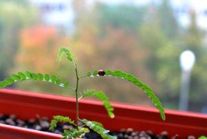 росток, окно, листья, жук