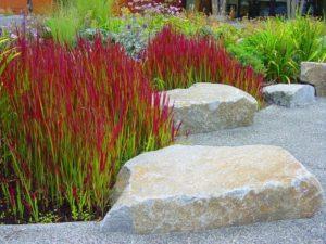 растение с красно-зелеными листьями, камни, растения