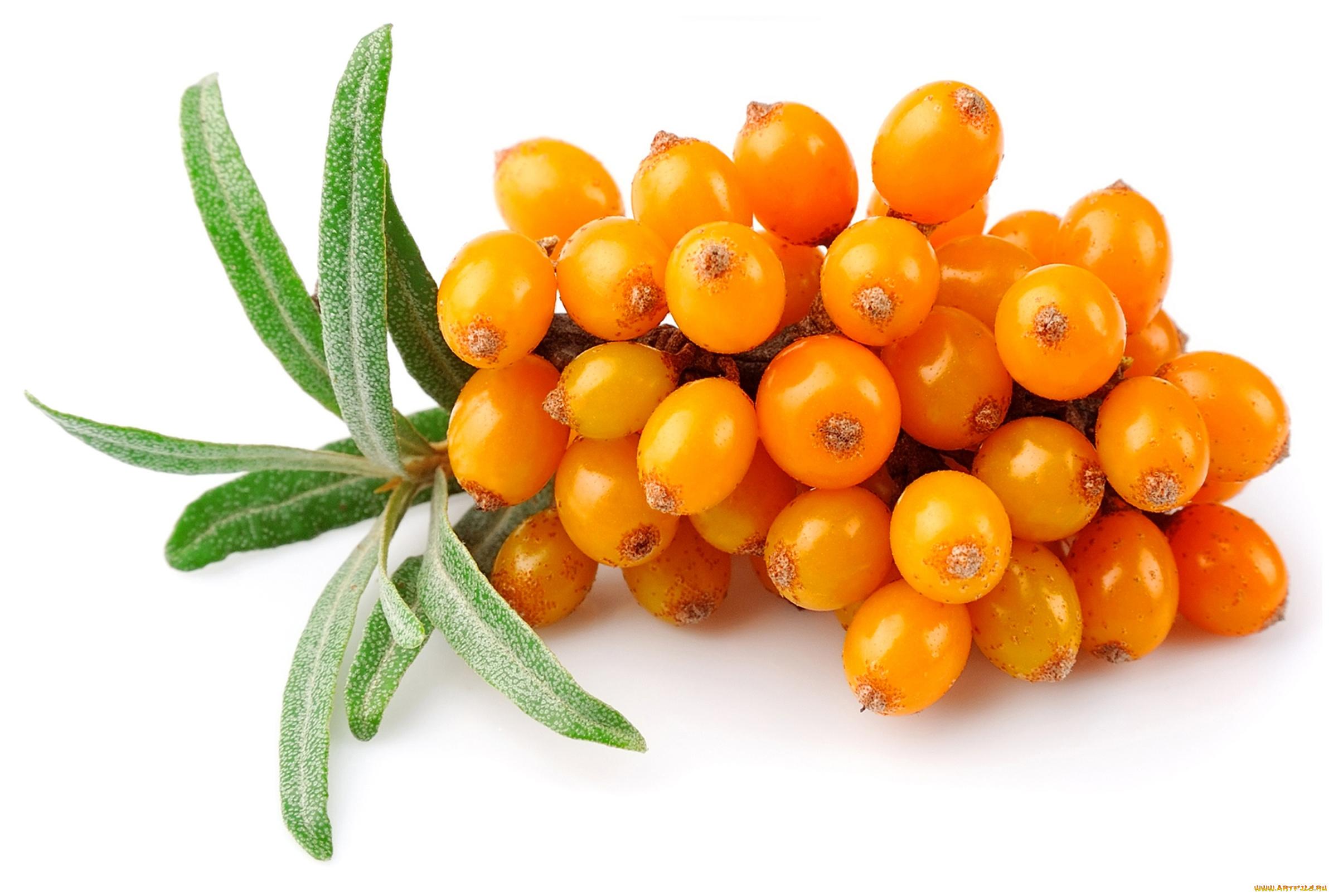 Облепиховые ягоды