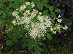 Белые цветки, листики зеленые