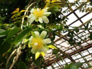 желтые цветы, листья зеленые