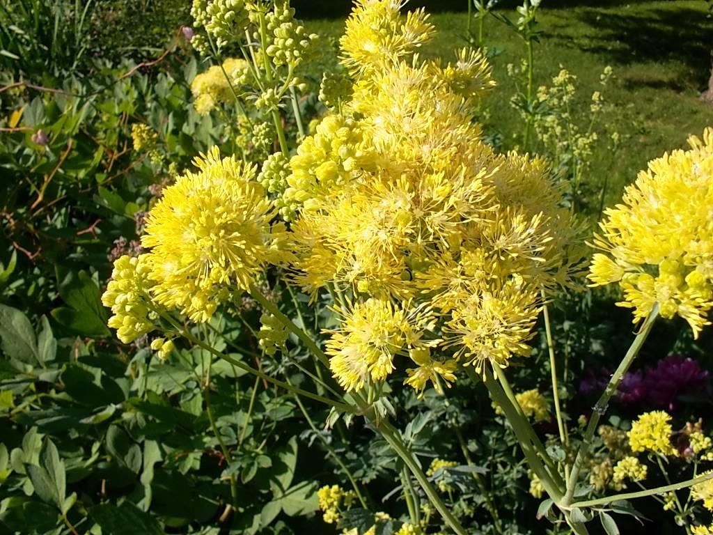 Желтые цветы, зелень