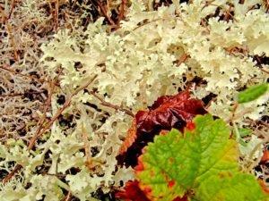 Мох, трава, листья