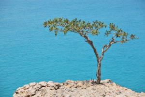 дерево, море, скала