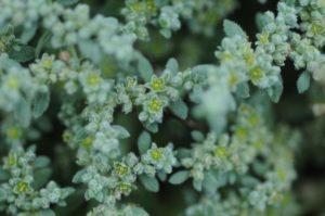 мелкие зеленые листья