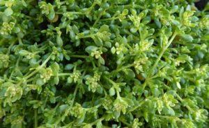 зеленая трава, мелкие листья