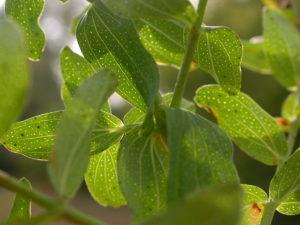 зеленые листья с дырочками