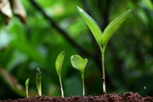 молодые ростки, почва