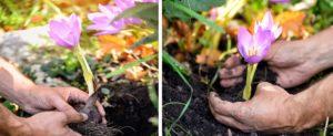 руки, почва, цветы