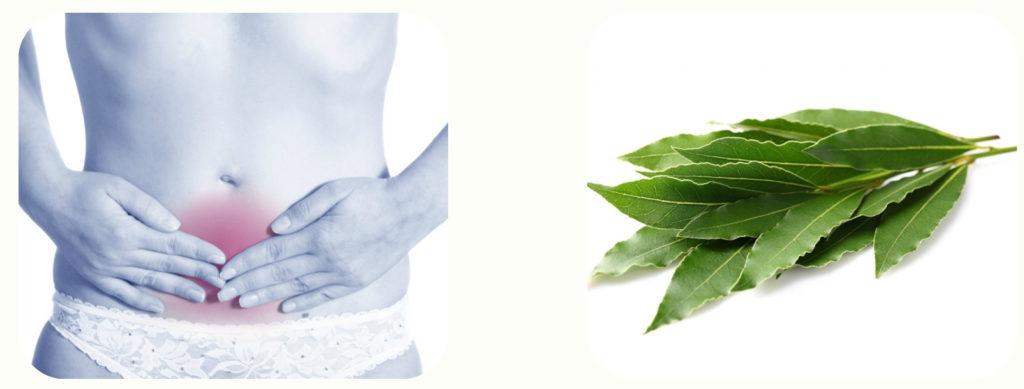 Лавровый лист при лечении цистита
