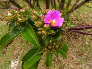 лиловый цветок, почва, зеленые листья, ветки