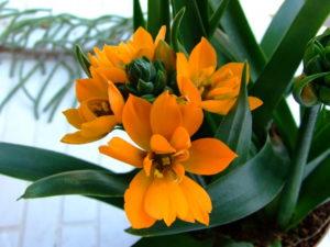 оранжевые цветы, зеленые листья