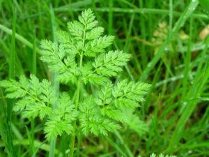 зеленый лист, трава