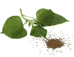 зеленые листья, семена