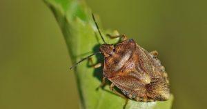 жук на листе