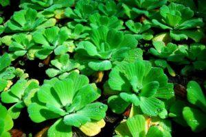 зеленые растения, вода