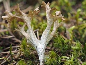 Растение, мох, трава