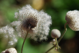растения с семенами