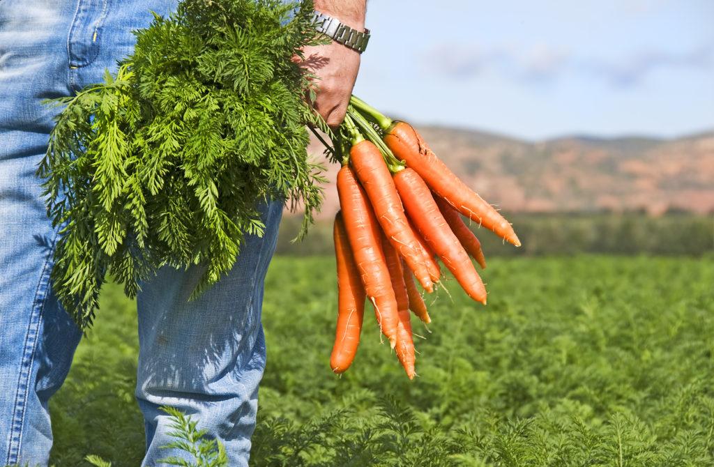 морковь для мужчины