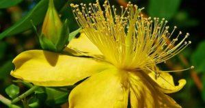 желтые лепестки, тычинки, листья