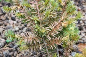 Листья растения зеленые и коричневые