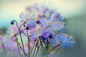Цветки, закат