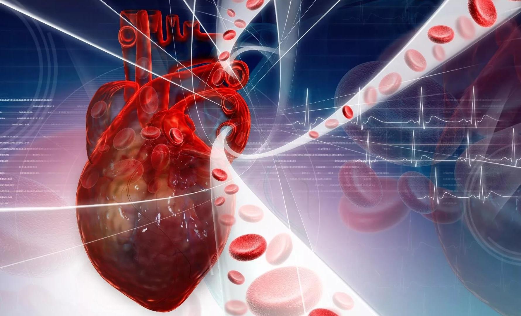 Сердце, эритроциты, сосуды