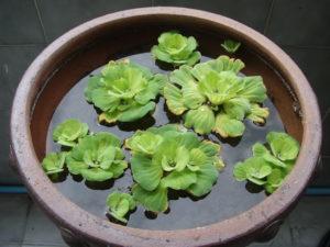 зеленые растения, вода, емкость