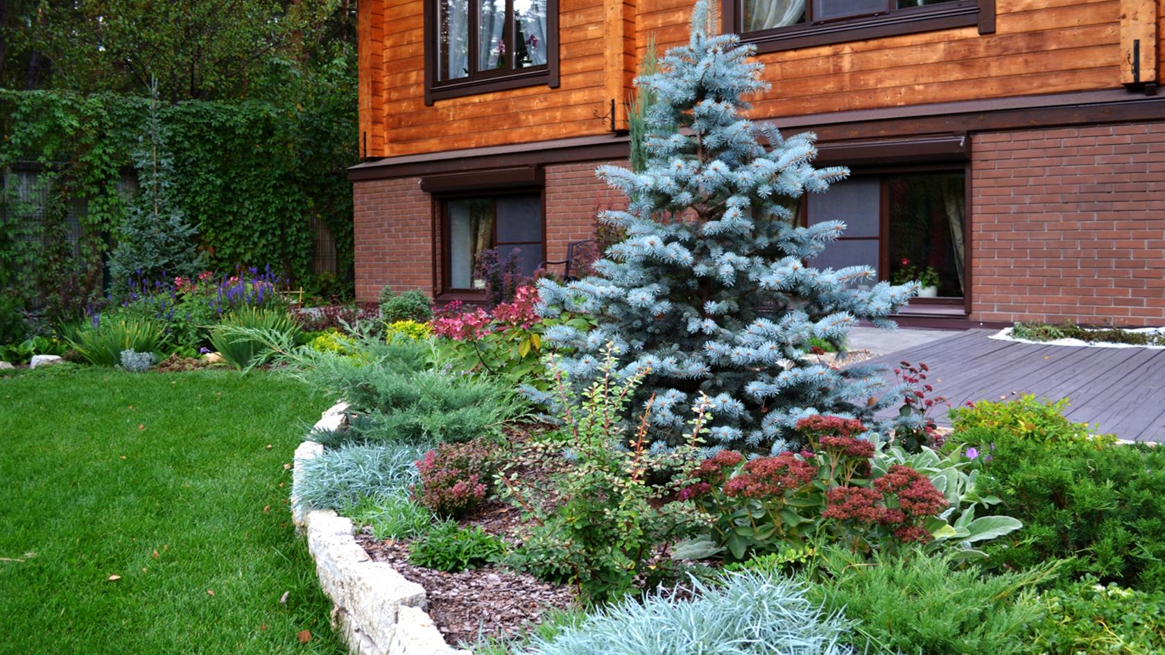 ель, растения, клумбы, дом