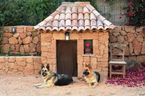 собаки, домик, забор, двор